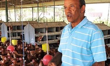 AAVIL admite falência de avicultores