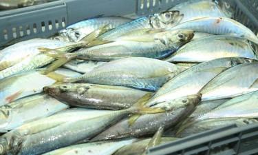 Pescangola com perdas mensais de 40 milhões kz
