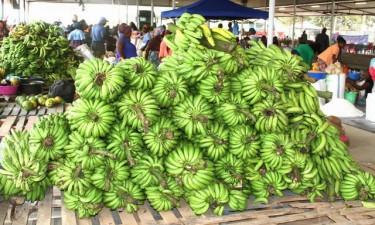 Fazenda Girassol vai exportar banana e mamão para Portugal