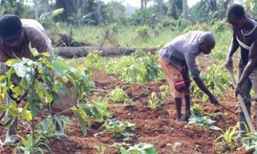 Facilcred financia agrícultores com 329 milhões AKZ