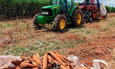 Angola é terceiro maior produtor africano de mandioca