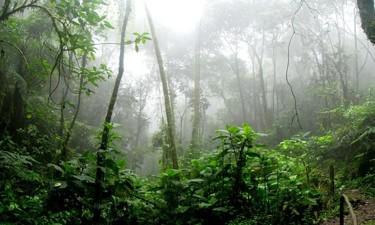 Destruição de florestas aumentou em 2020