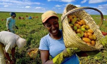 Produtores agrícolas estão a ser recenseados