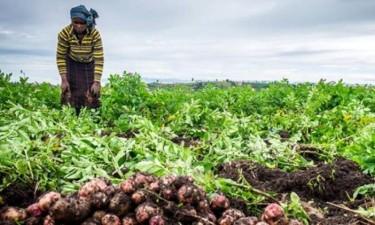 Presidente autoriza contratação emergencial para aquisição de bens agrícolas