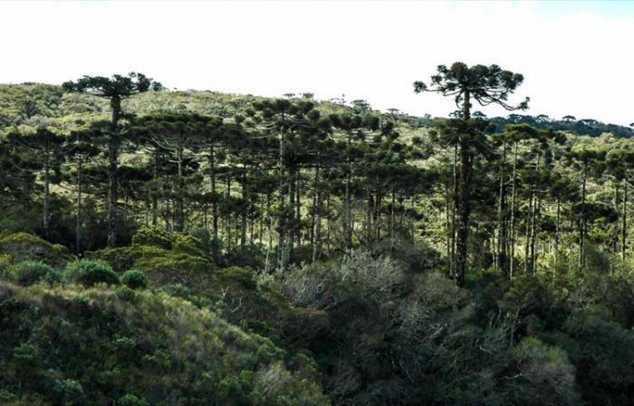 Cientistas alertam para a destruição da natureza
