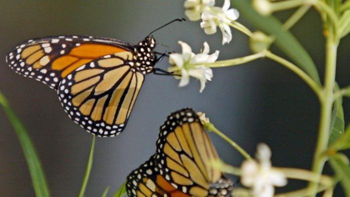 Há um milhão de espécies ameaçadas de extinção