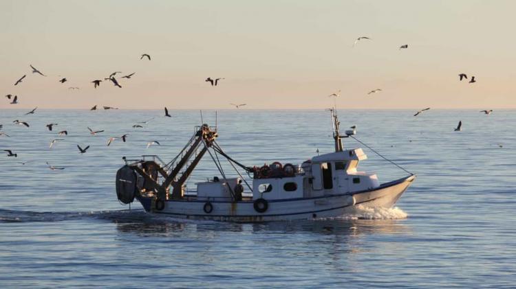 Alterações climáticas diminuem zonas pesqueiras