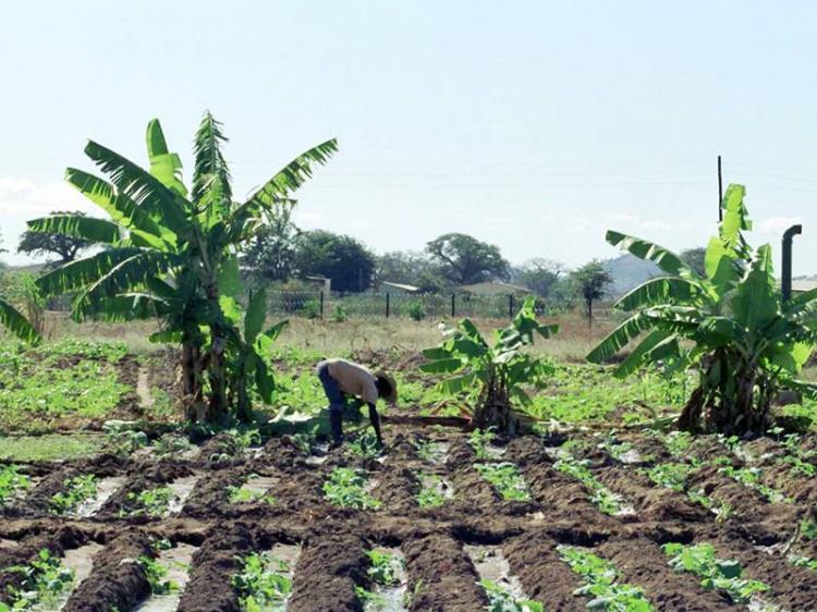 Governo promete 'entregar' terra aos camponeses