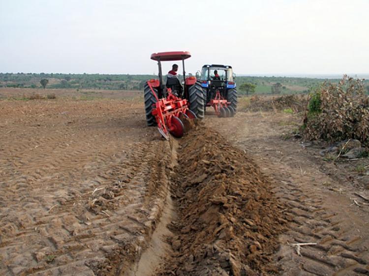 600 mil hectares para o novo ano agrícola