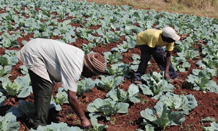 FIDA vai disponibilizar 150 milhões USD para Moçambique