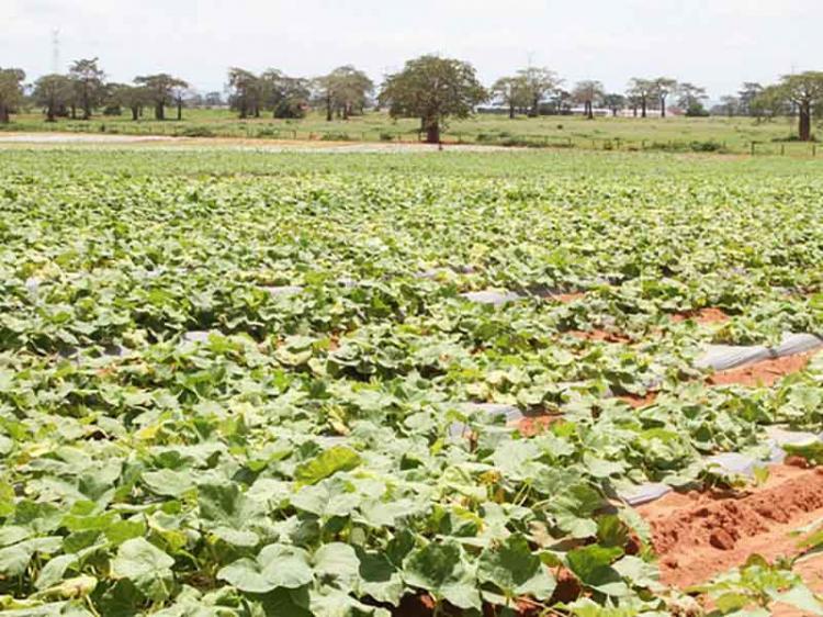 'Quiminha' cede espaço a agricultores