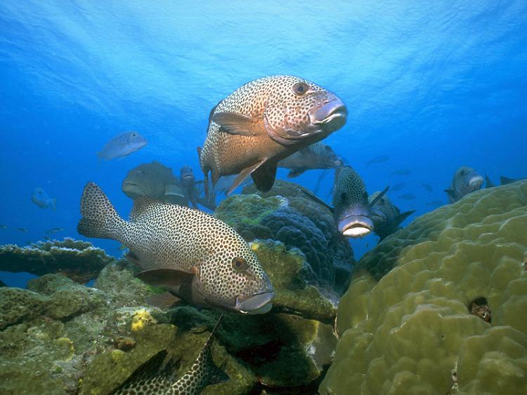 Cientistas defendem que Áreas Marinhas Protegidas Móveis sejam consagradas