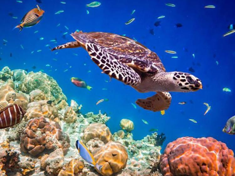 Pelo menos 26% dos oceanos terão de ser protegidos