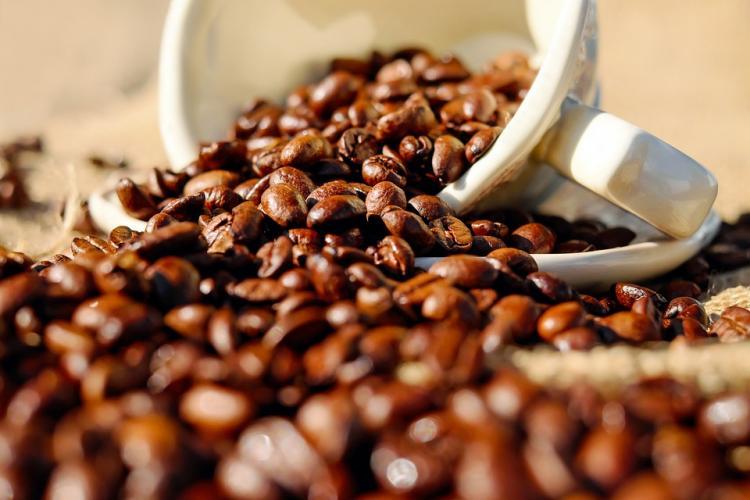 Novagrolider investe mais de 800 mil USD para processar café