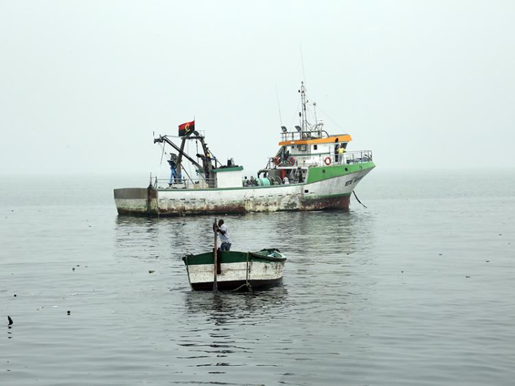 Arrastos prejudicam oferta de peixe