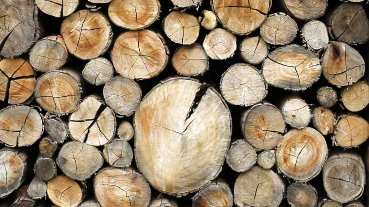 Angola levanta interdição de corte de árvores
