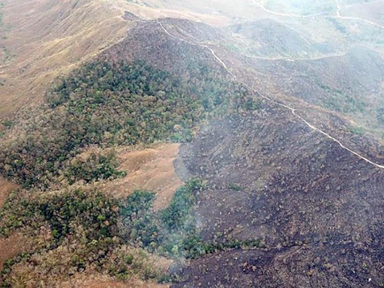 Desflorestação aumenta quase 64%