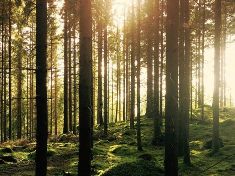 Protecção das florestas é fundamental para salvar biodiversidade