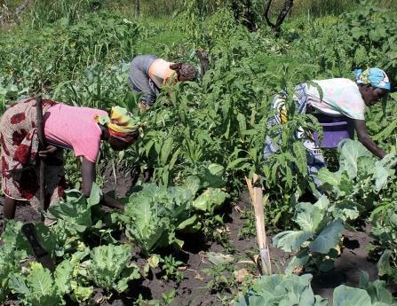 FAO vai apoiar mais de mil escolas de agricultores
