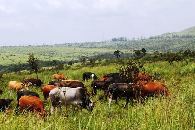 Recenseamento agrário retoma em Julho