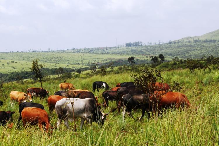 Culango recebe experiência-piloto do Censo Agro-pecuário