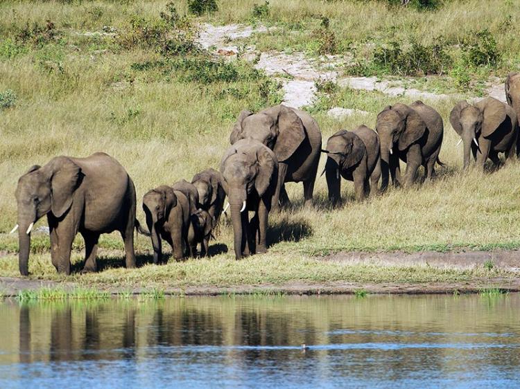 Infecção já matou 22 elefantes no Zimbábue