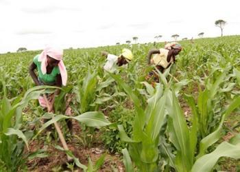 BDA financia 500 projectos agrícolas