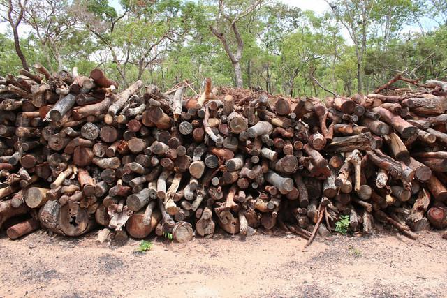 Organização ambientalista denuncia desmatação