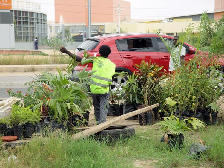 Venda de plantas floresce nas  ruas de Luanda