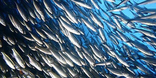 Pesca extrativa movimenta 400 mil toneladas