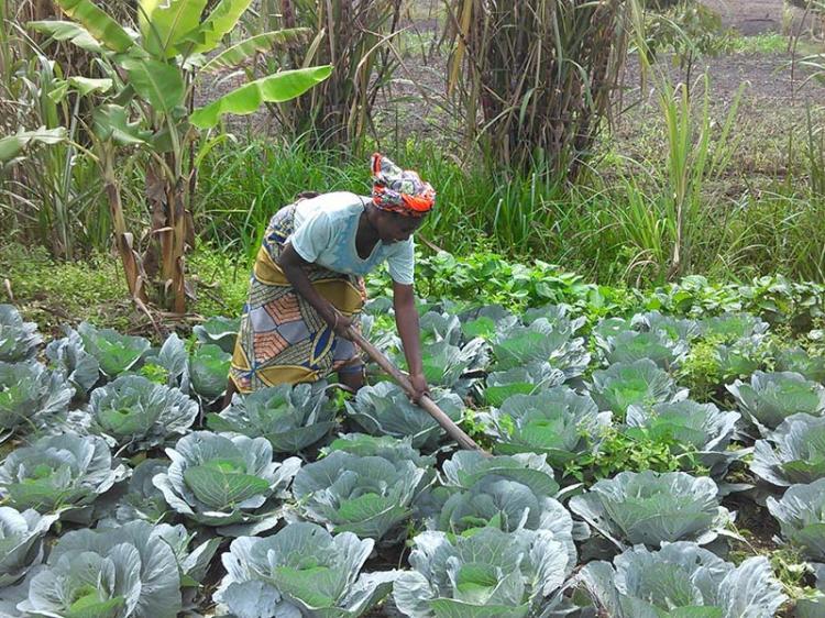 Prodesi não salva produtores agrícolas