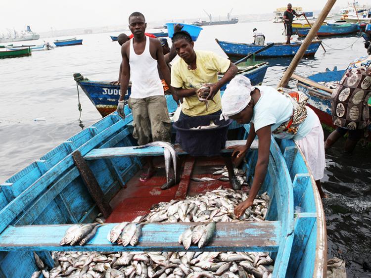 """Dados das Pescas continuam sem a """"precisão científica desejada"""""""