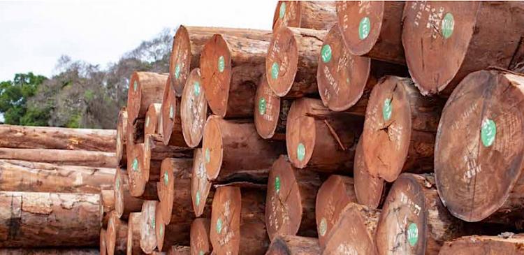 AbwikWood quer exportar  22% da produção