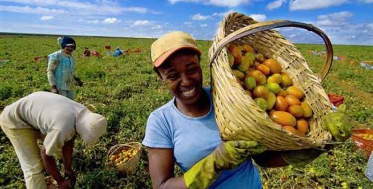 Economia prevê registar 40 mil produtores até 2022