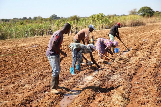 FAO distribui insumos agrícolas para mitigar os efeitos da seca