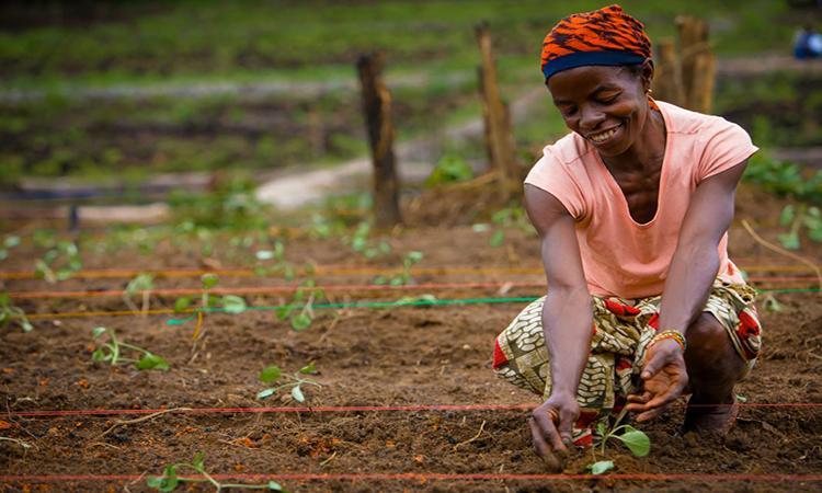 Redras ajuda a tornar agricultura familiar sustentável
