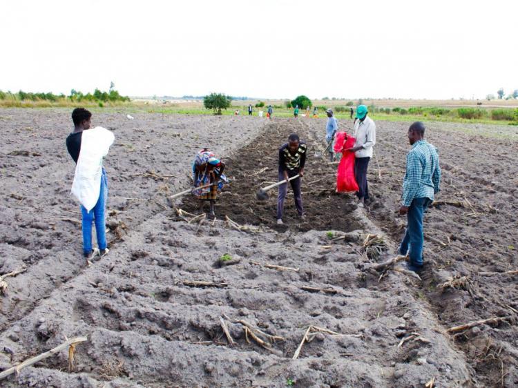 O fomento do agro-negócio em Angola  (Parte I)