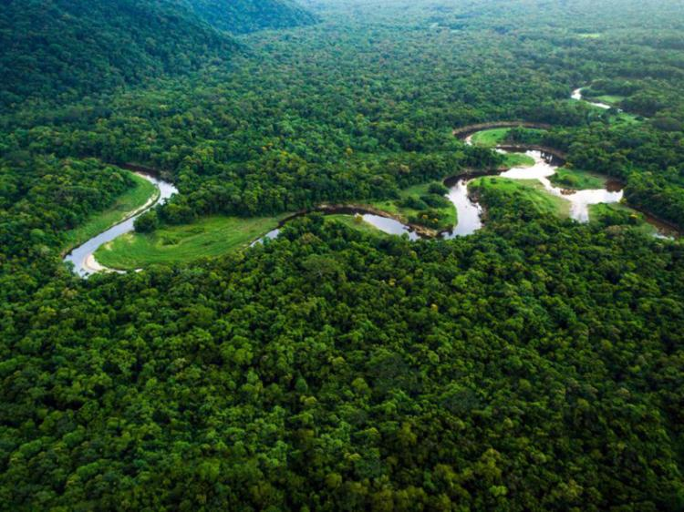 Desflorestação cresce 17,1% no primeiro semestre