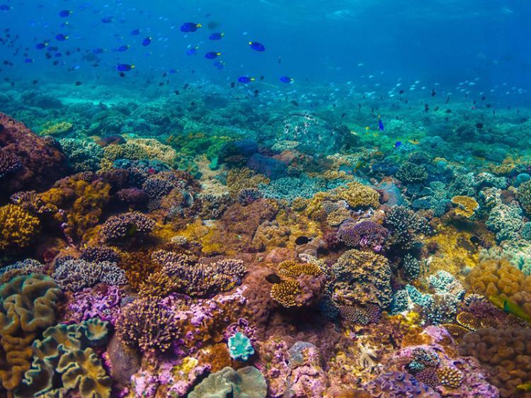 14% dos corais do mundo desapareceram
