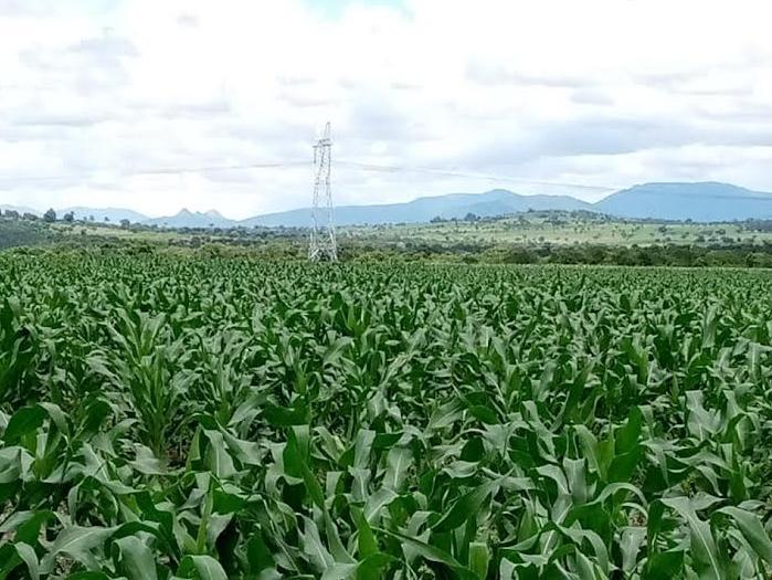Receitas da Agro-Quiminha recuam 80% desde 2020